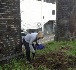 Removing nettles on Brighton Greenway